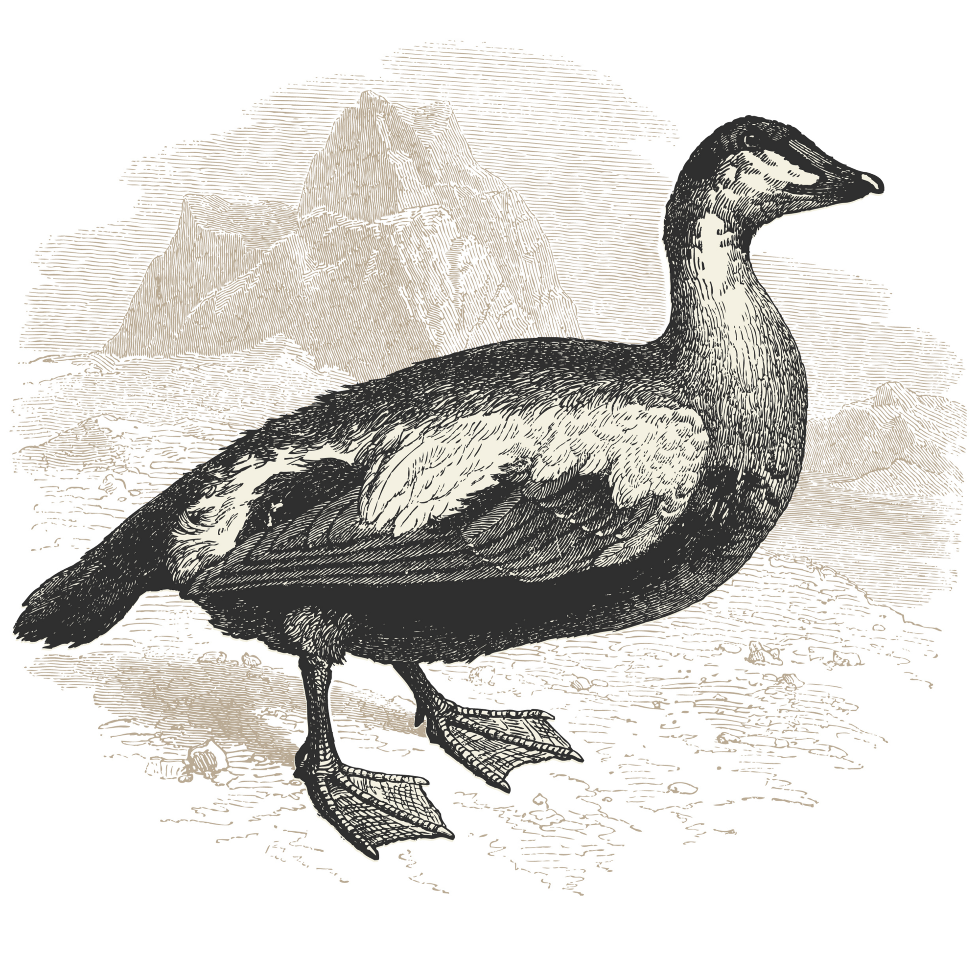 Black and white sketch of a duck with a mountain in background.