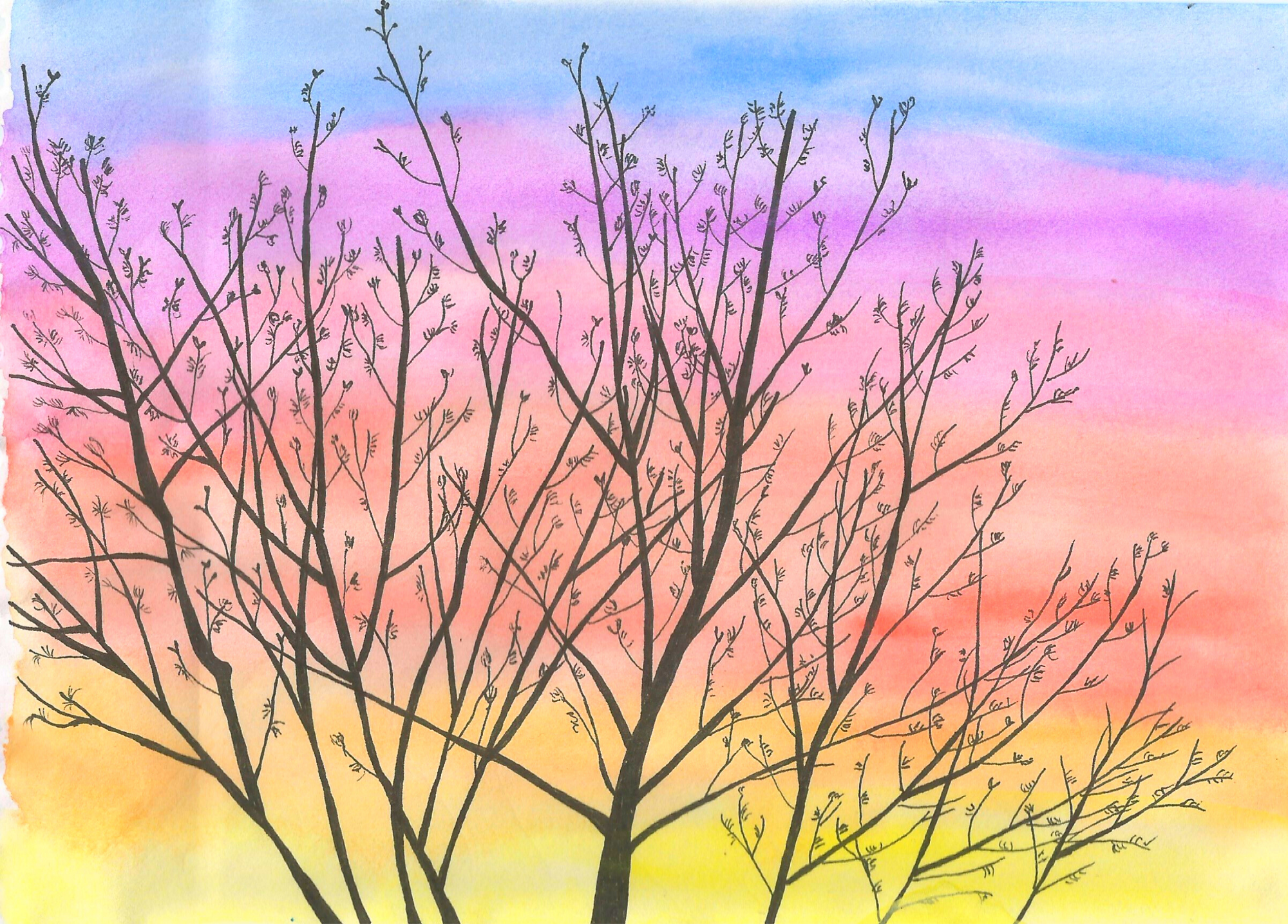 Drawing of treetops in the sunset