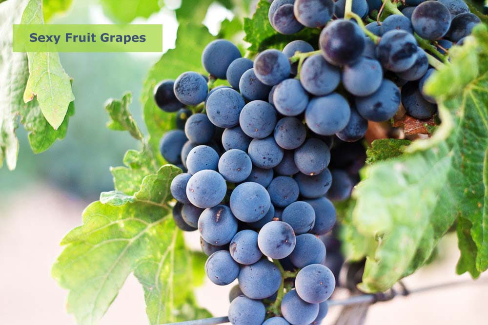 Escorts in Powai Suggest Grapes