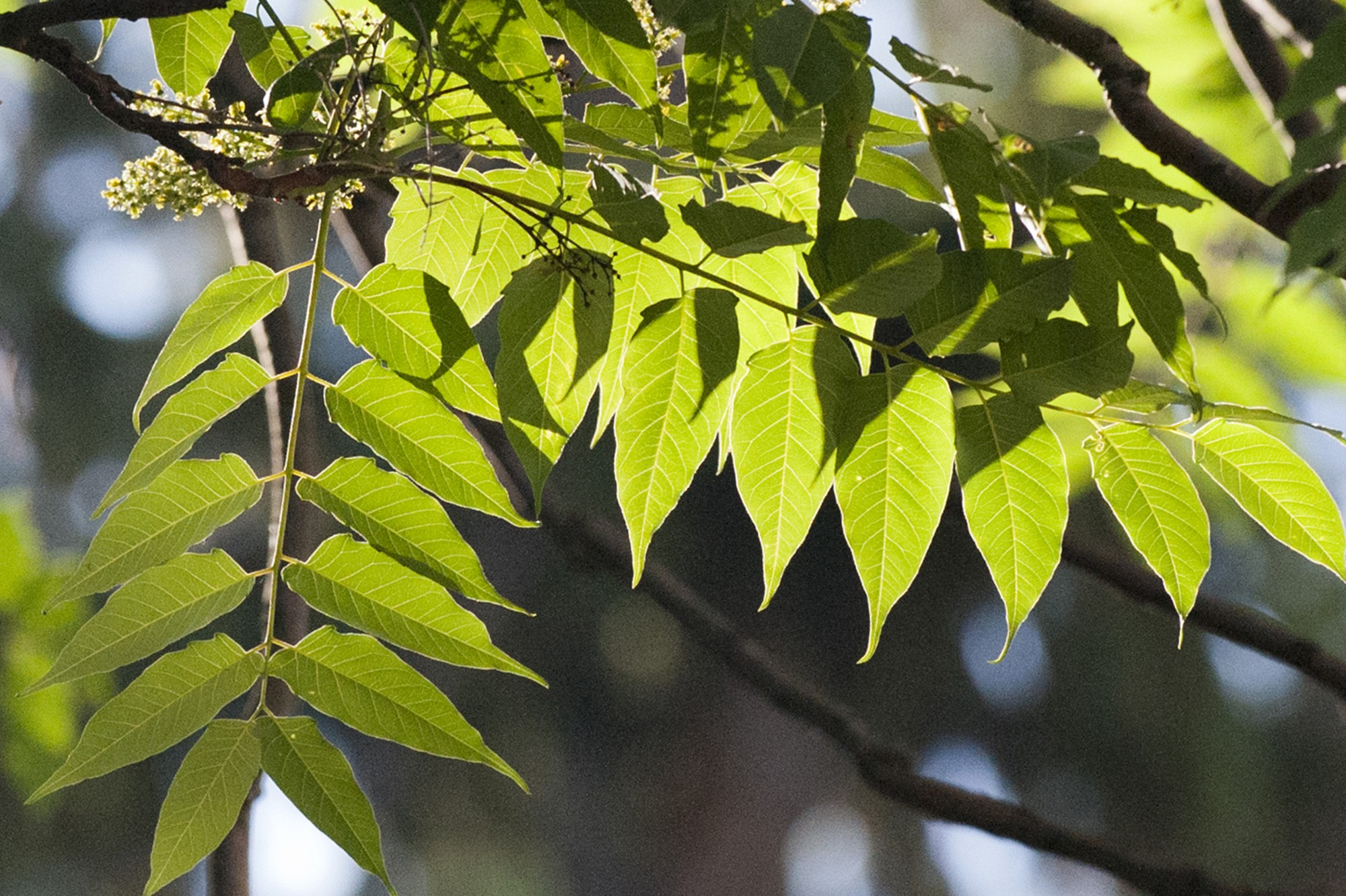a view underneath leaves as the sun hits it from above