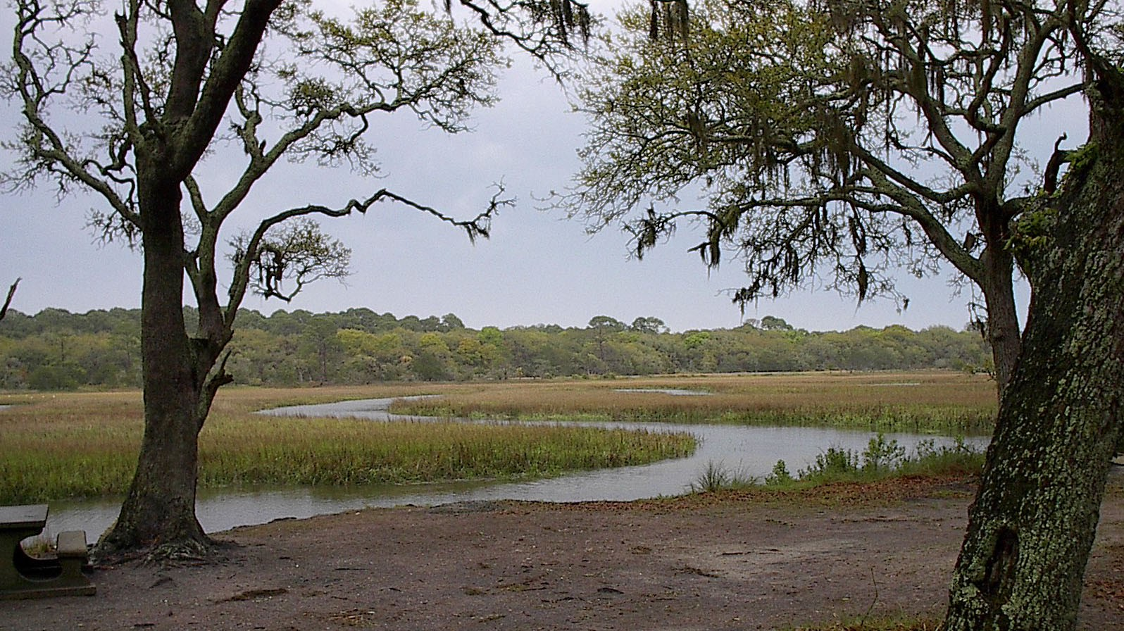 A marsh near Jekyll Island, Georgia, with two trees in the foreground.