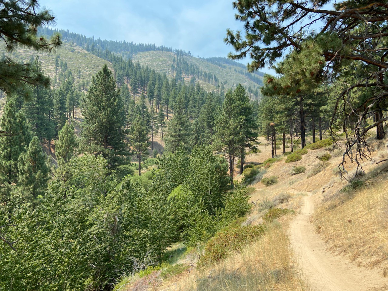 A dirt trail leading into pine trees with mountains and a smoky blue sky in the background.