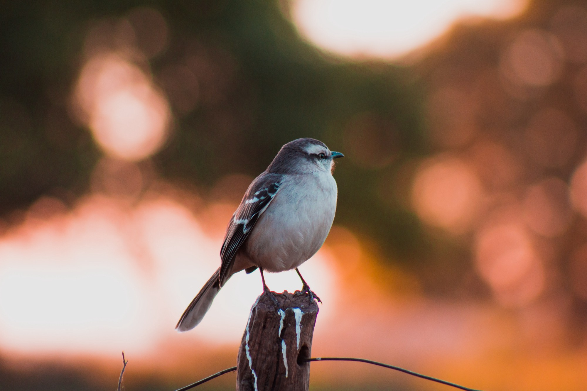 small brown bird sitting on a fencepost