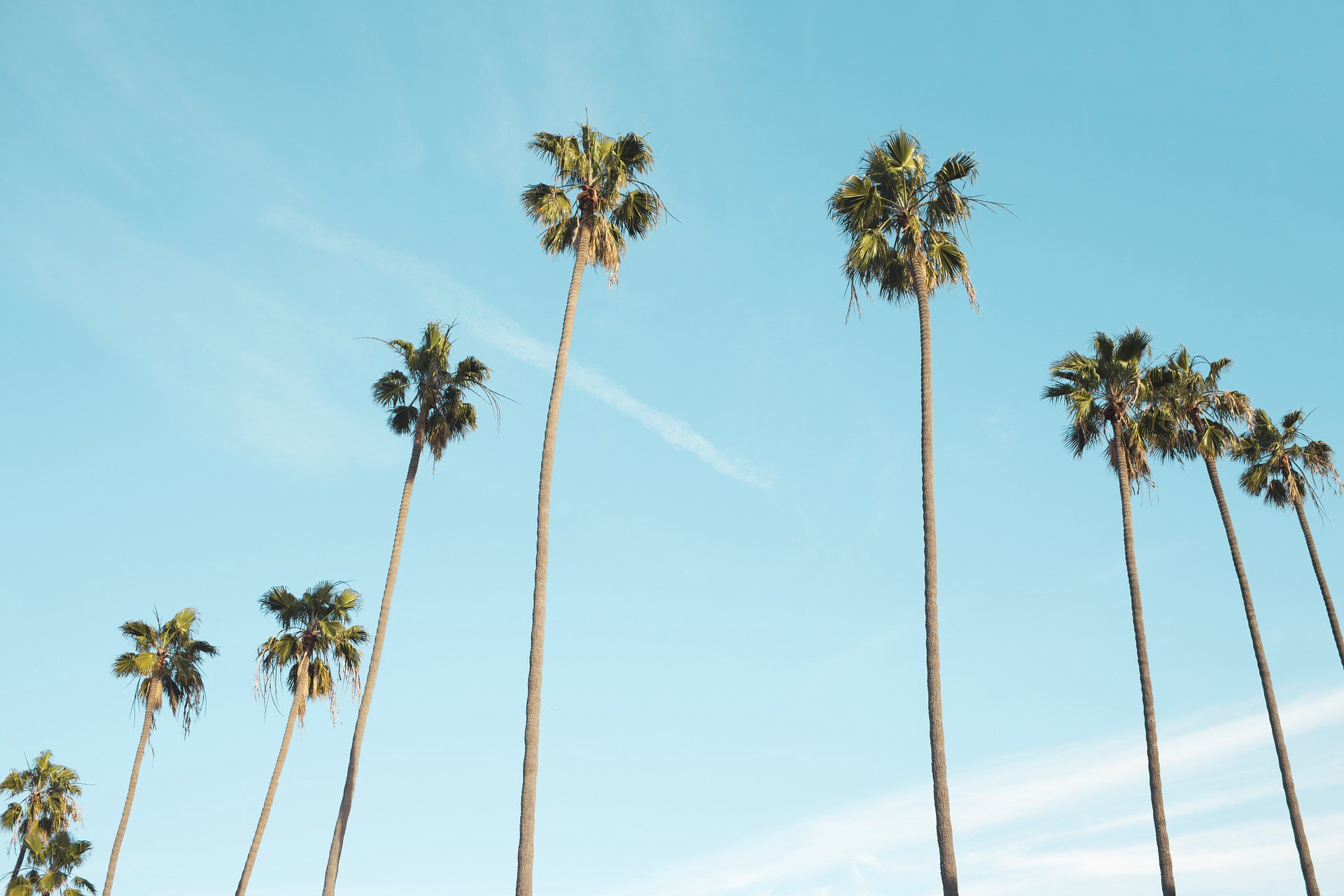 Palm trees rustling in the breeze become audible when people everywhere in the US are sheltering in place.