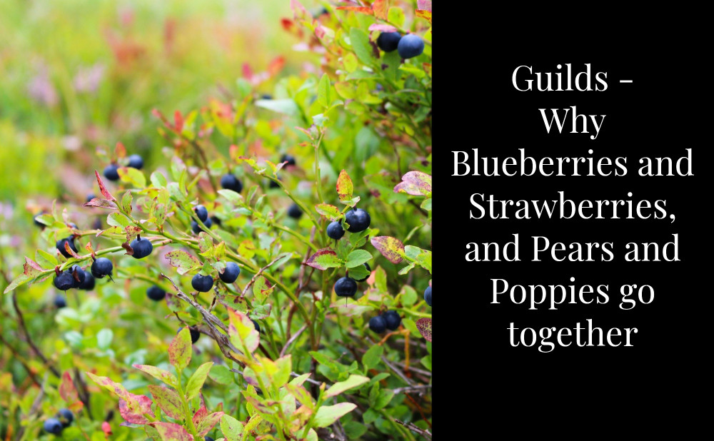 Blueberries,strawberries and pears grow well together