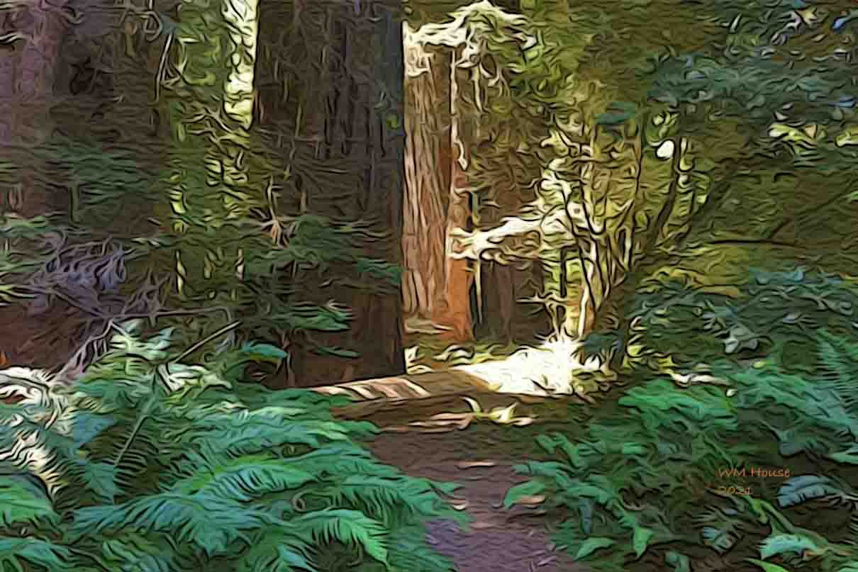 Image from a California Redwood Forest