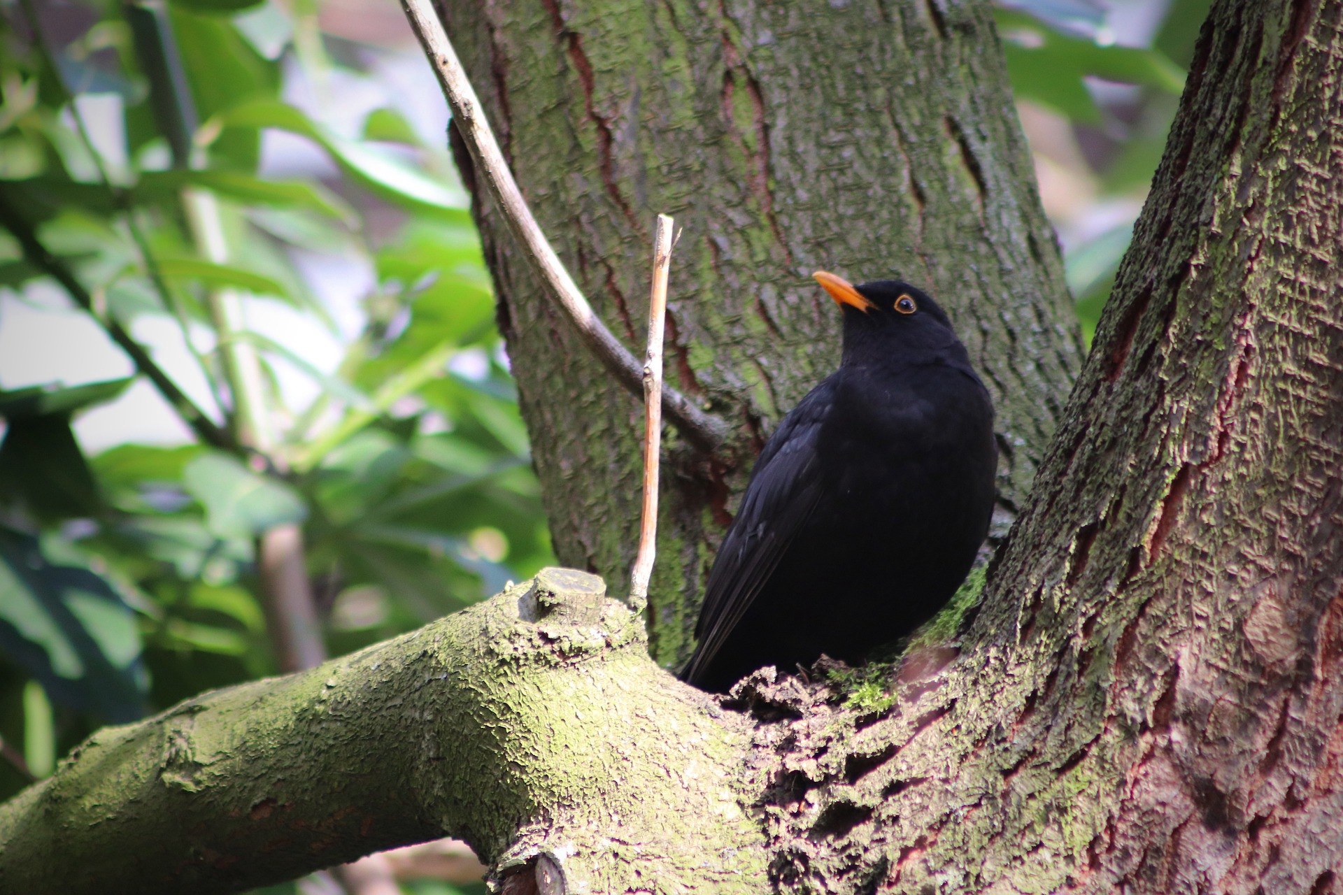 Black bird on a tree