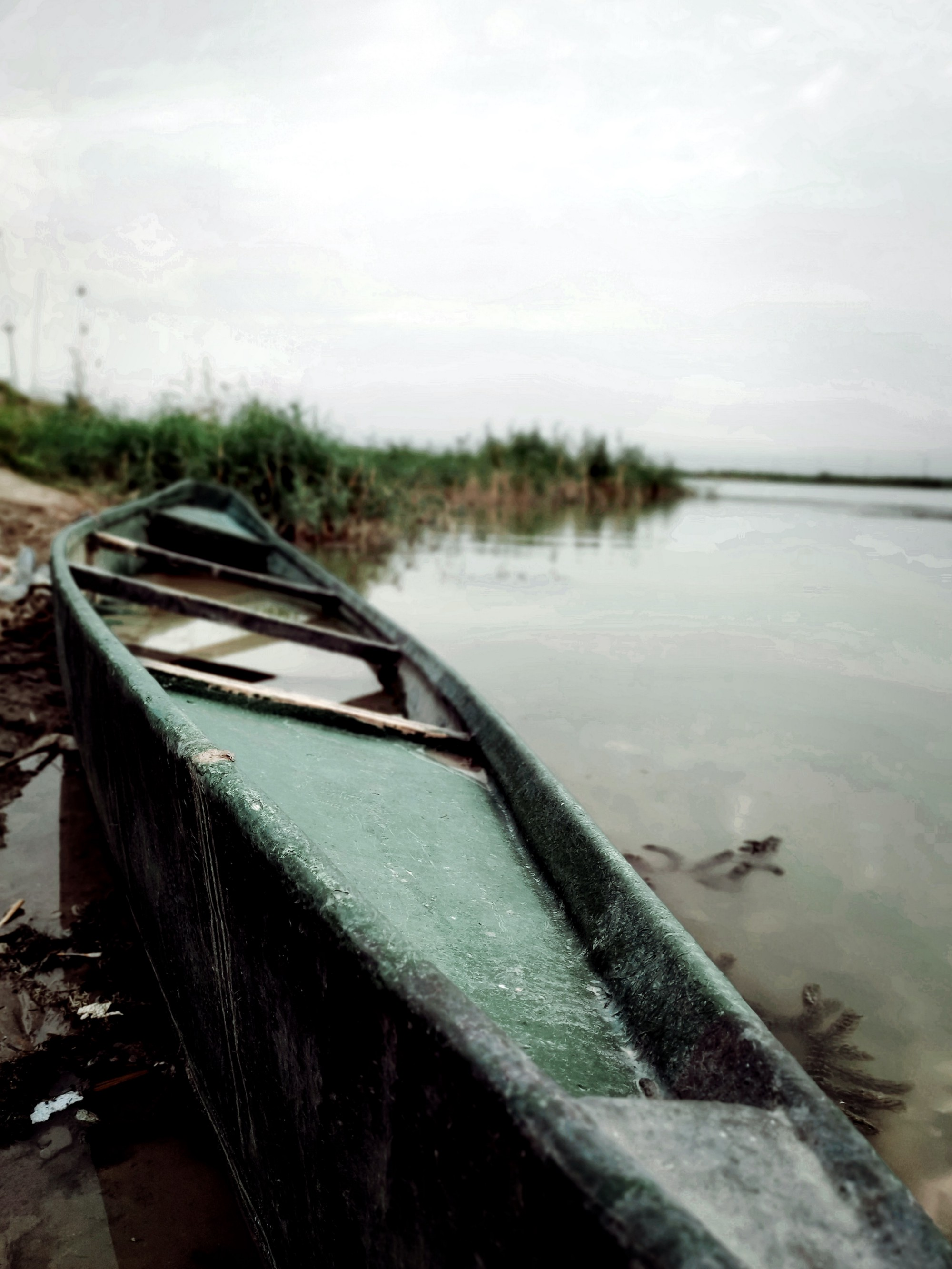 well-worn canoe resting on the shoreline in front of reeds
