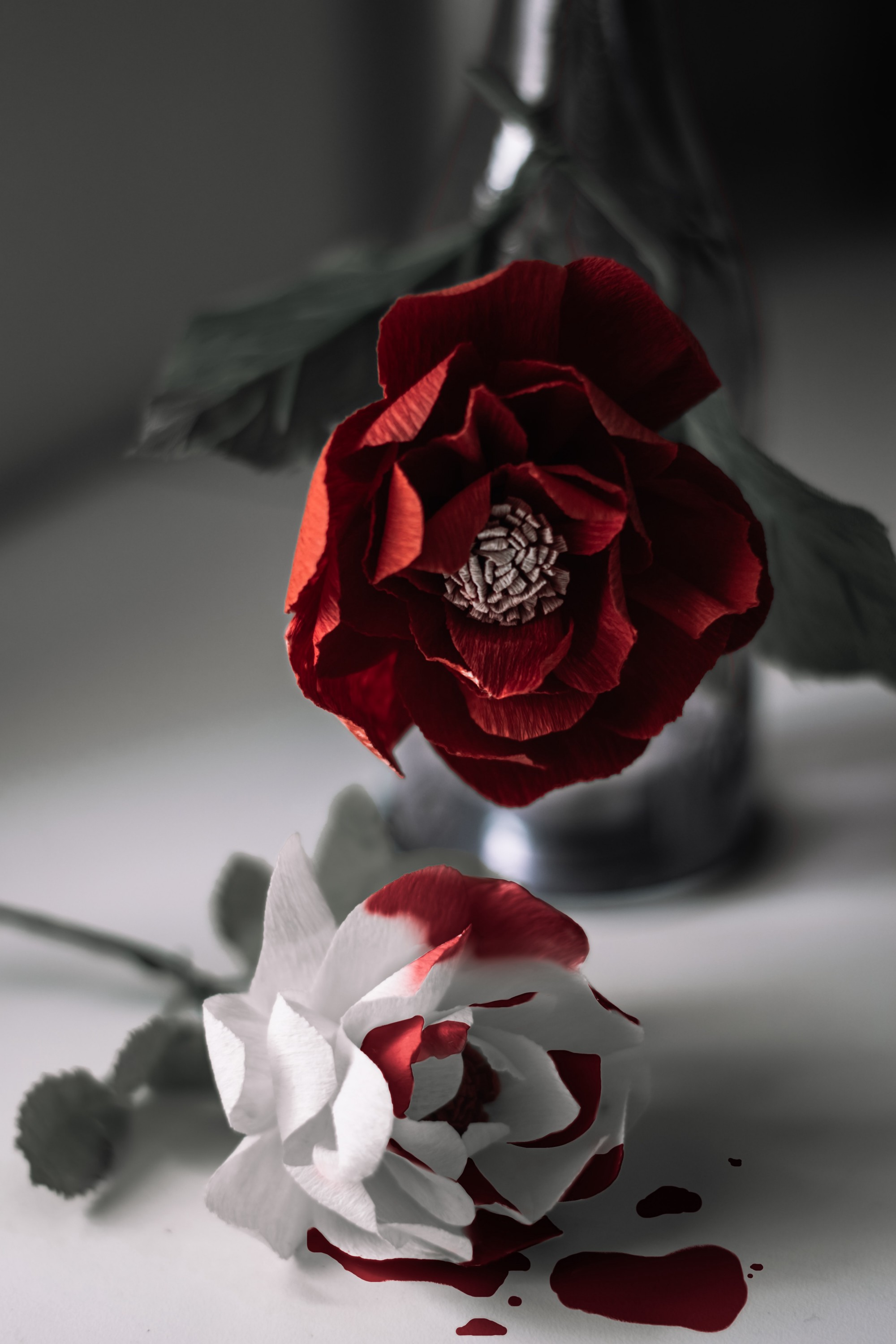A red rose over a white rose with red stains