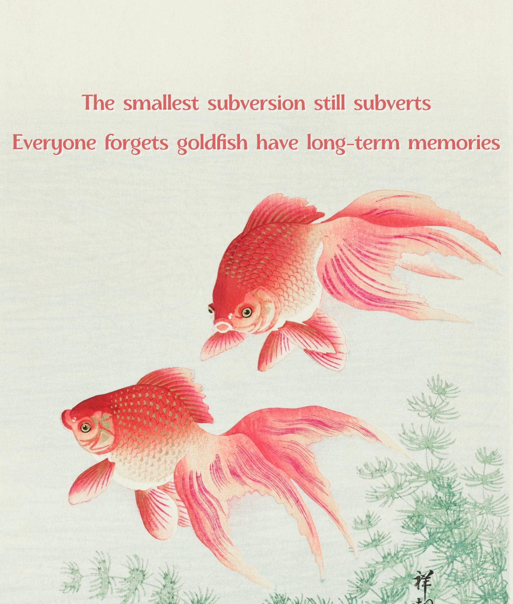 A beautifully colored illustration of two ruby and glowing orange goldfish, plus the aphorism below printed above them.