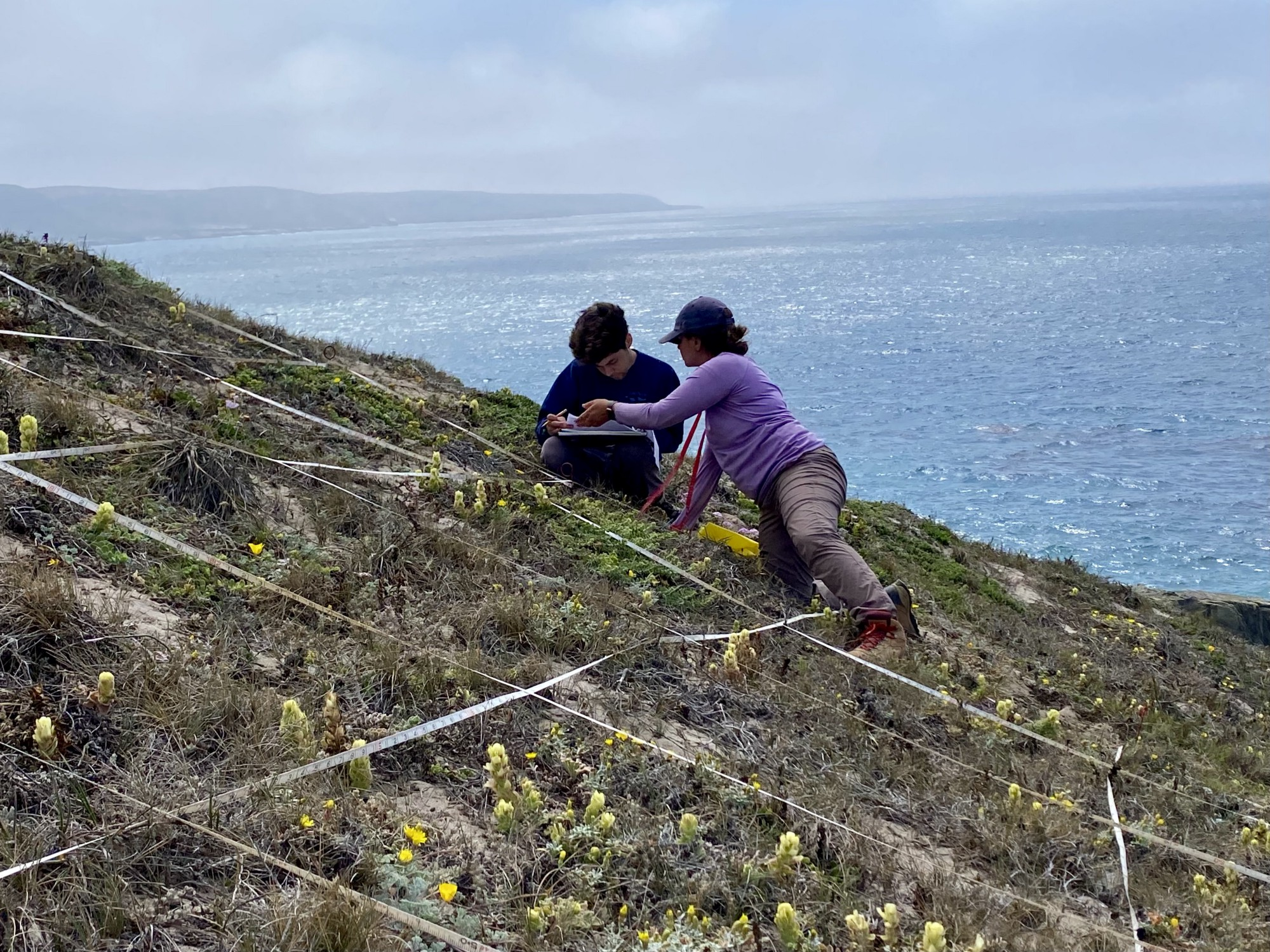 Daniel and another biologist monitor yellow flowers on a cliffside near an ocean