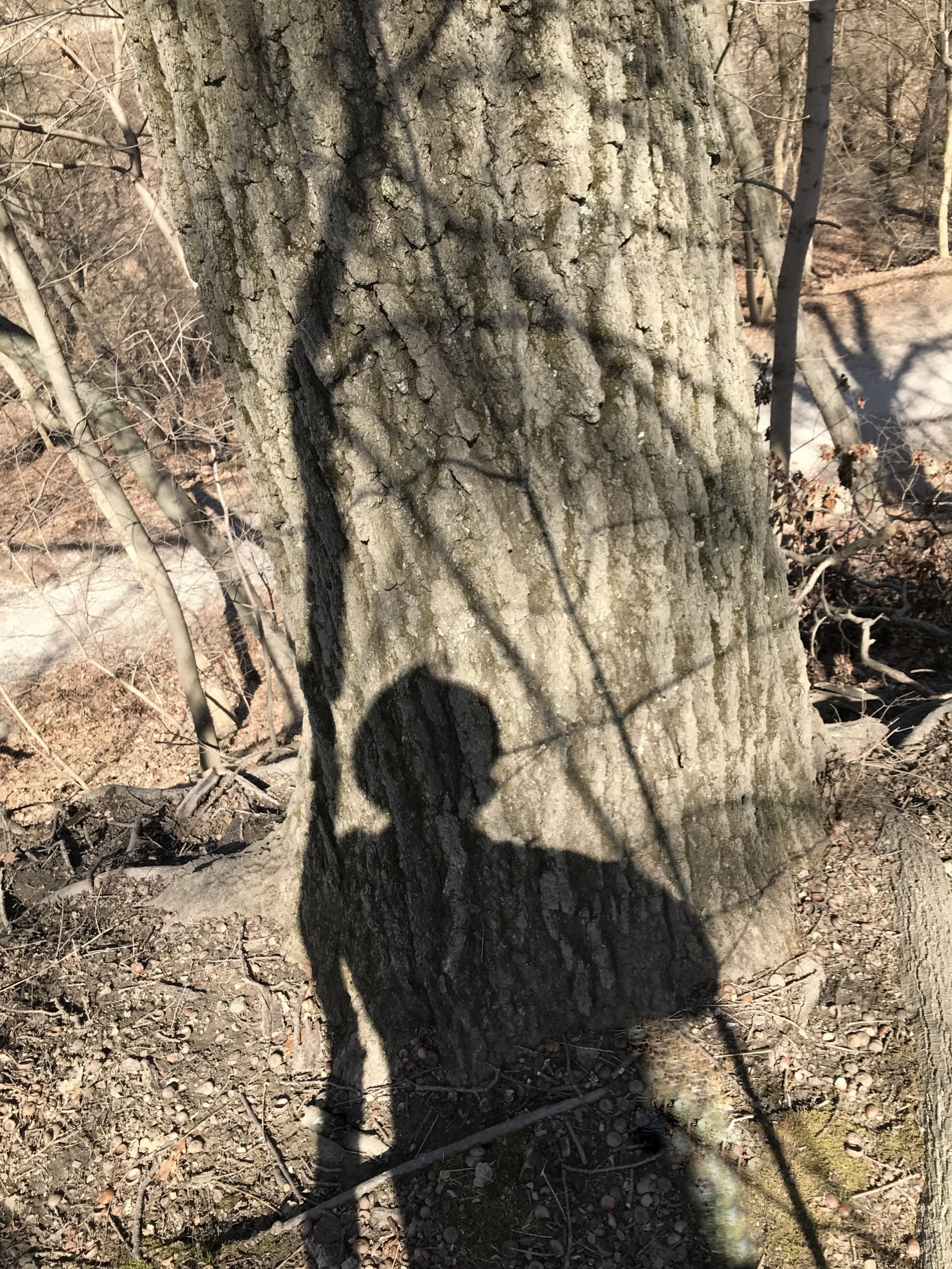 Photograph of a mans shadow wearing a fedora leaning against a thin tree cast upon a large tree trunk
