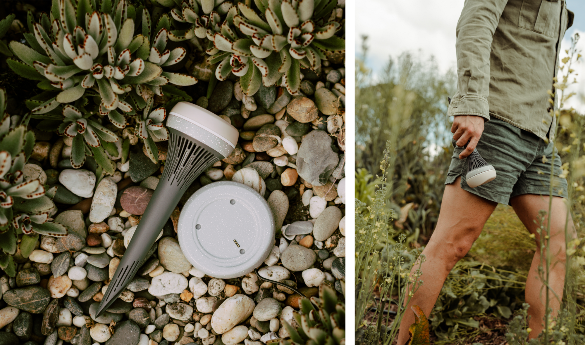 Left image: The monty monitor resting on a bed of succulents and pebbles. Right image: A khaki-clad man walking through a field holding the monitor in his hand.