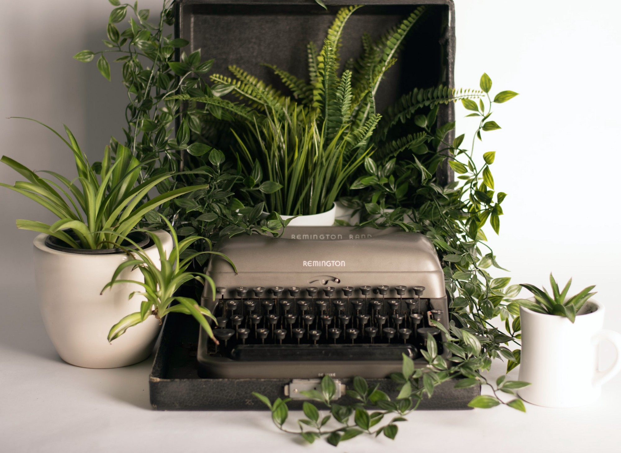 Grey and black typewriter with pots of green leave plants