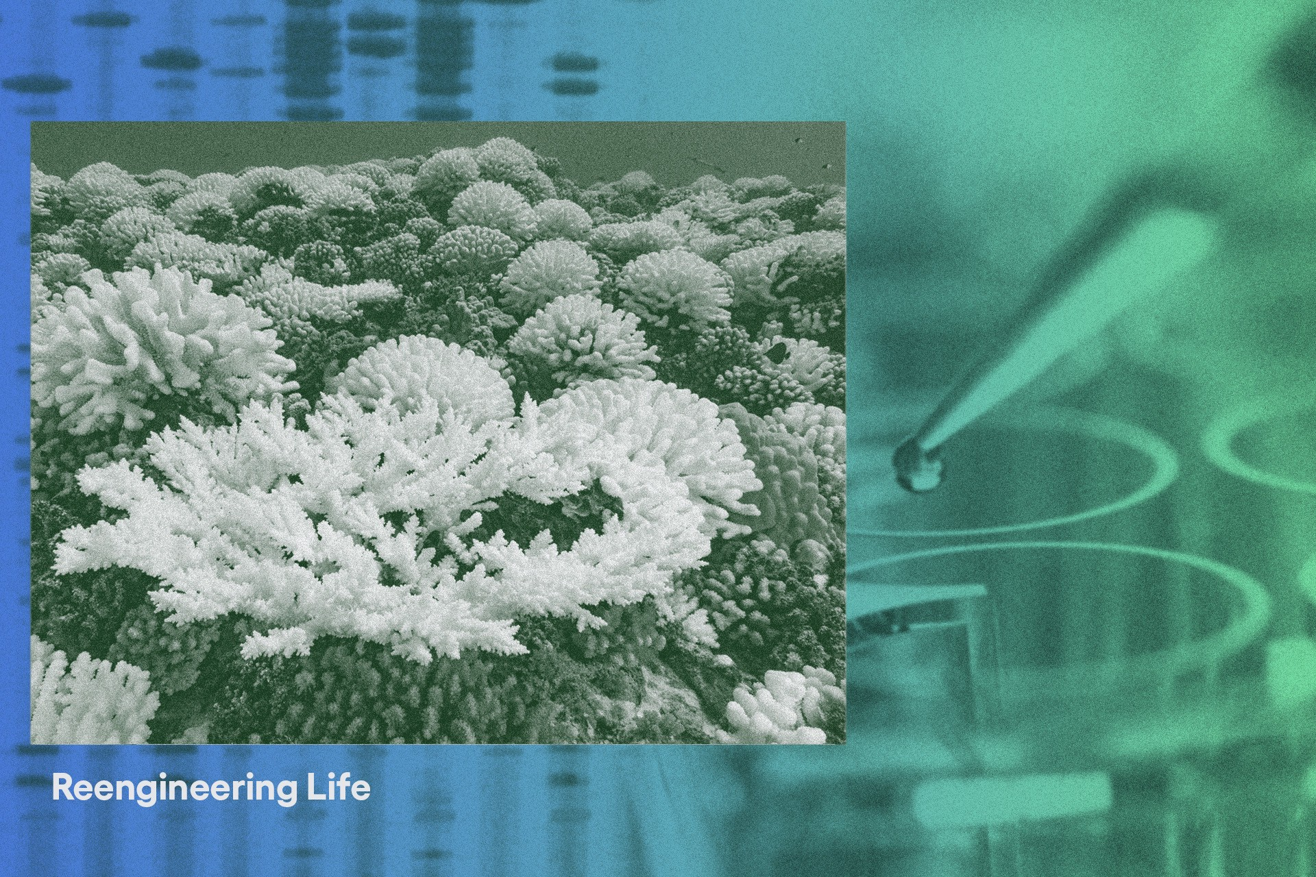Filtered image of coral against a background of pipette and DNA.