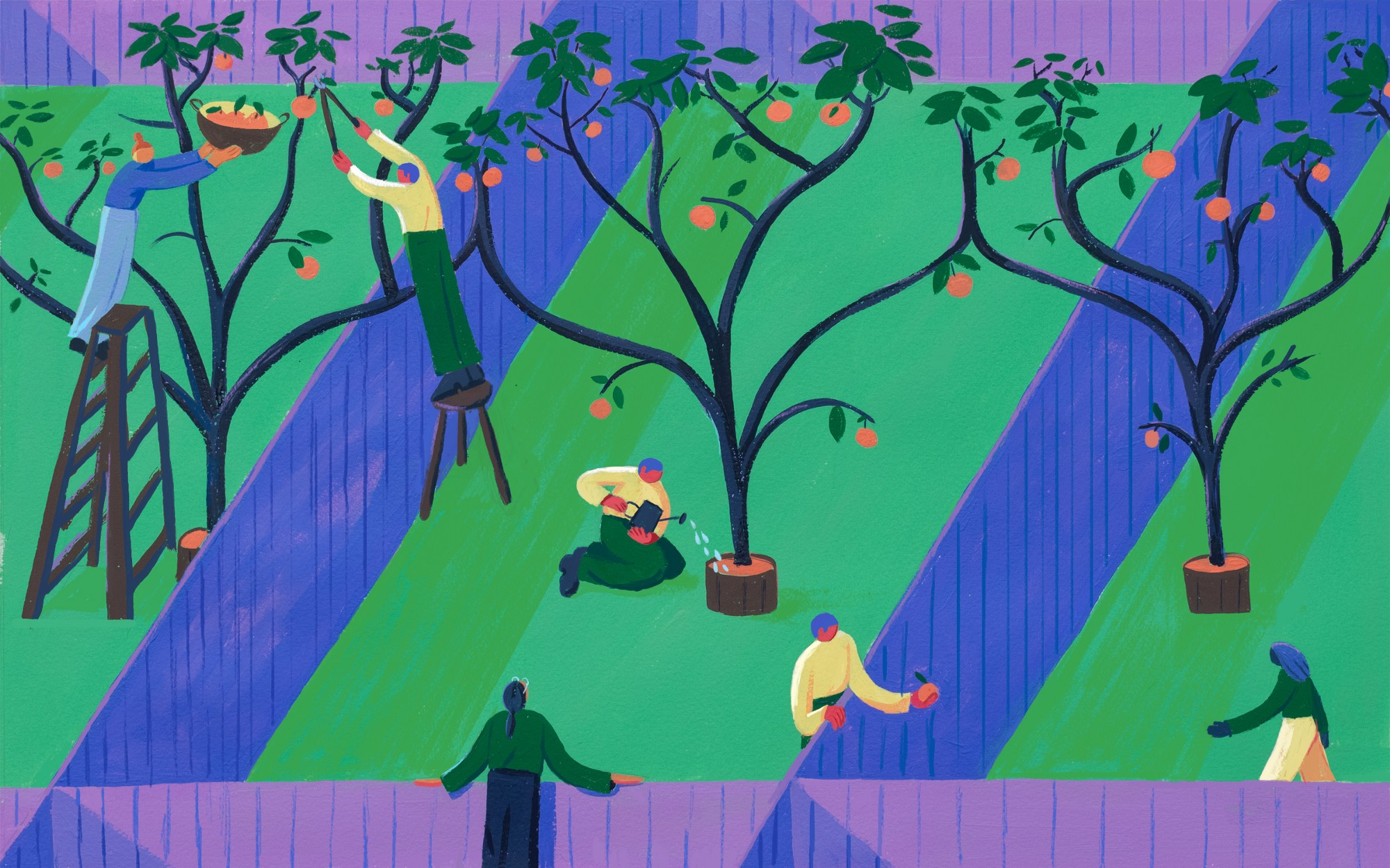Colorful illustration of people harvesting from orchard yards.