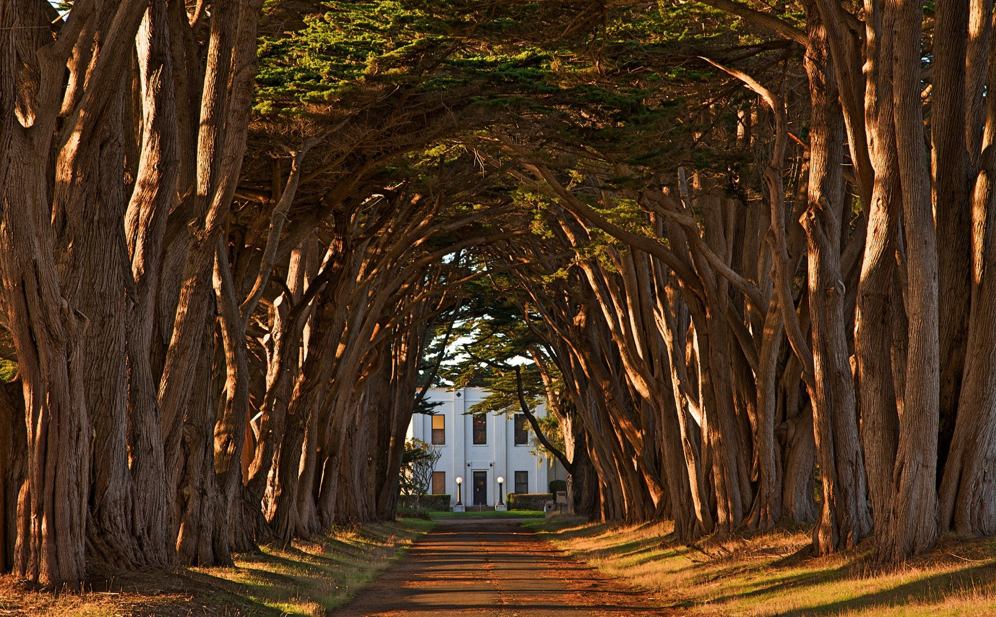 Cypress Tree Avenue