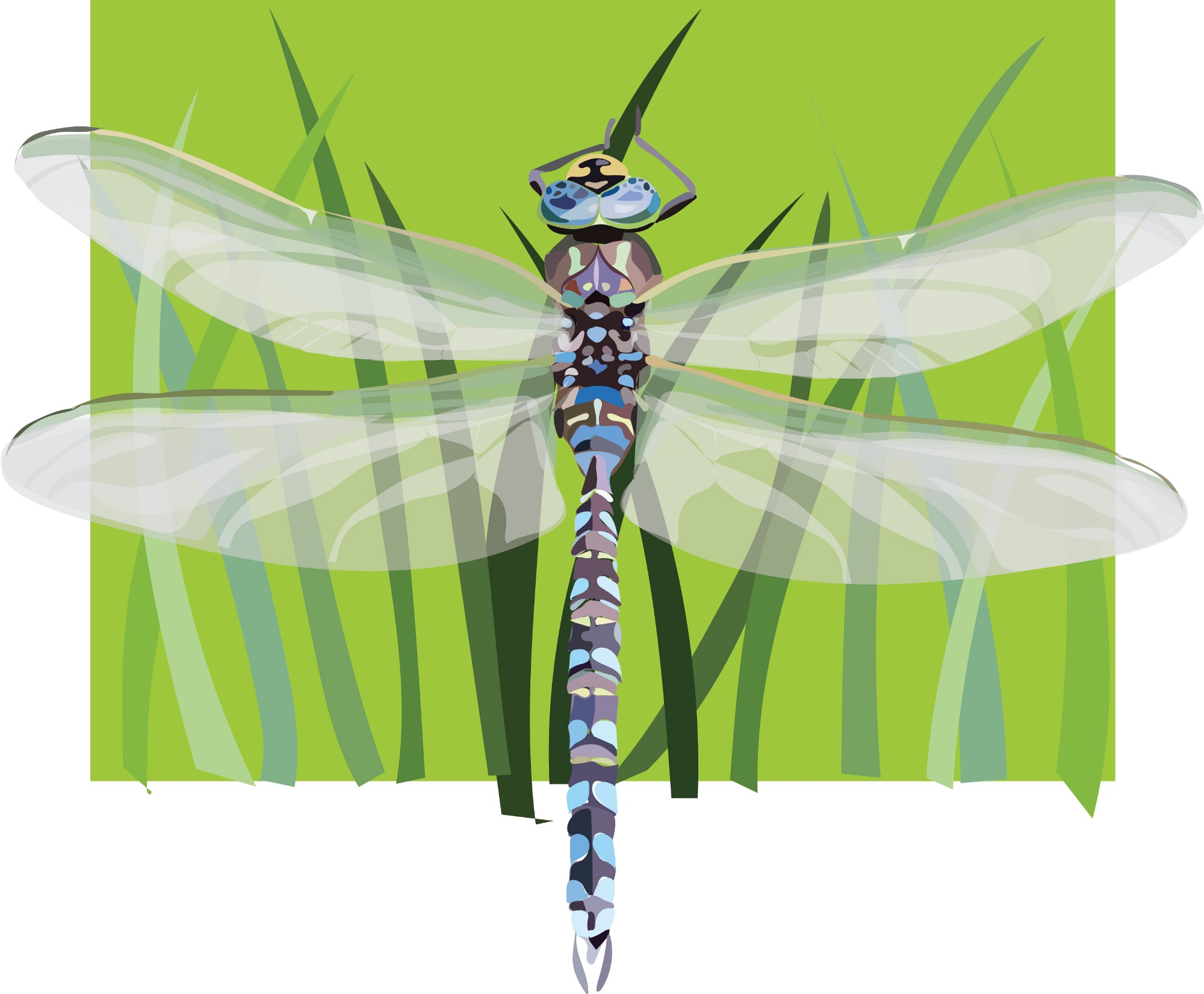 digital depiction of a dragonfly showing it on a blade of grass with wings stretched outwards.