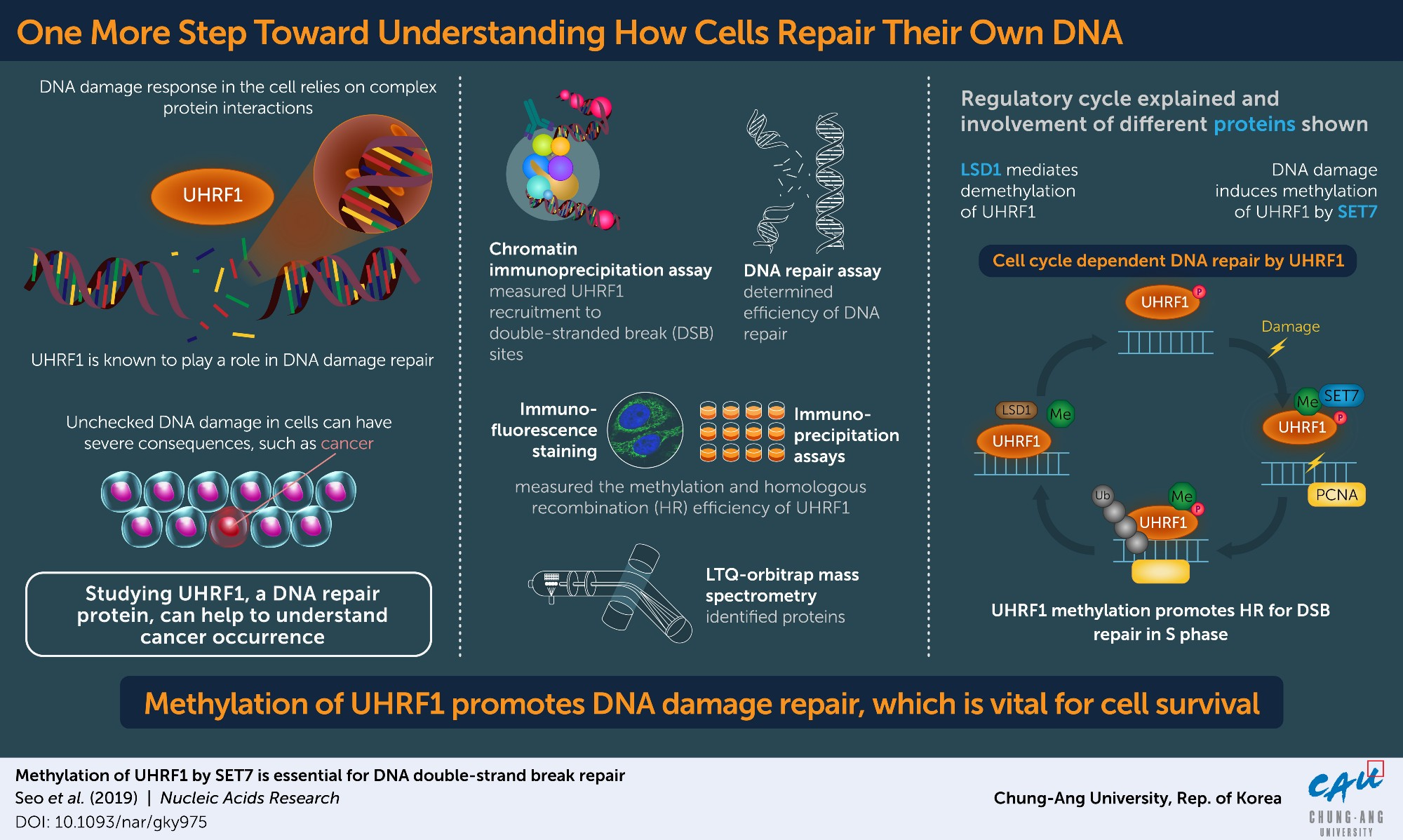 Methylation of a major DNA repair protein is critical to cell survival after DNA damage