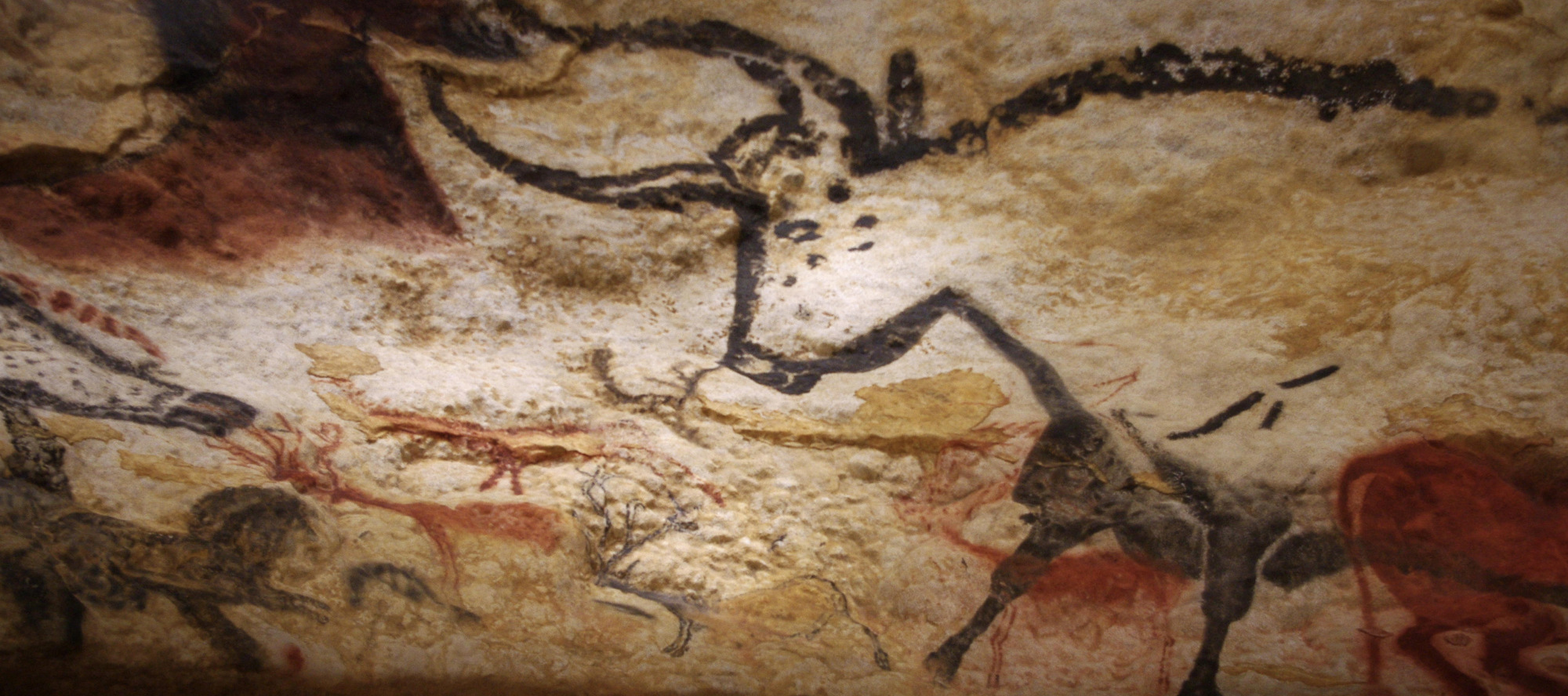 Picture of an ox in the walls of the caves in Lascaux