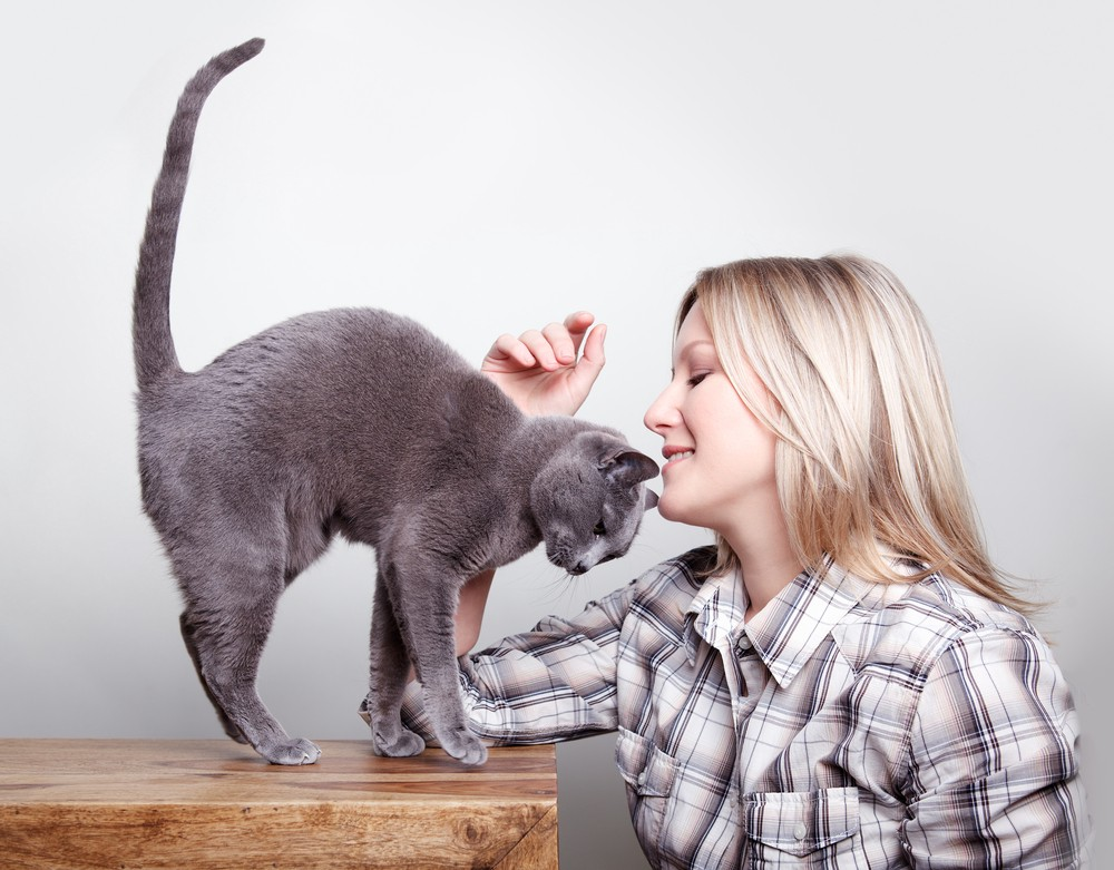 7 Reasons Why Humans & Cats Are A Match Made In Heaven