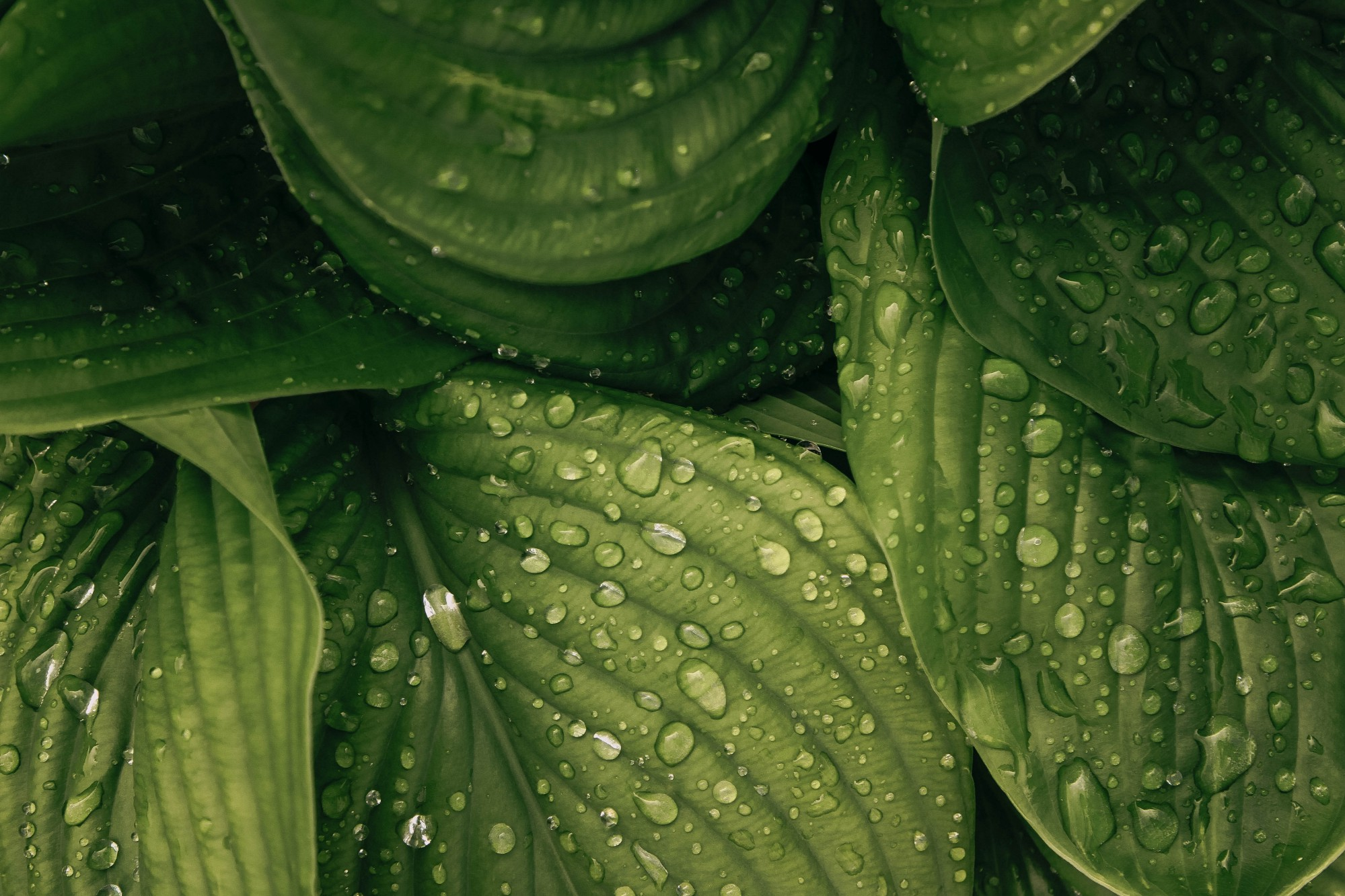 A photo of leaves by Liubov Ilchuk