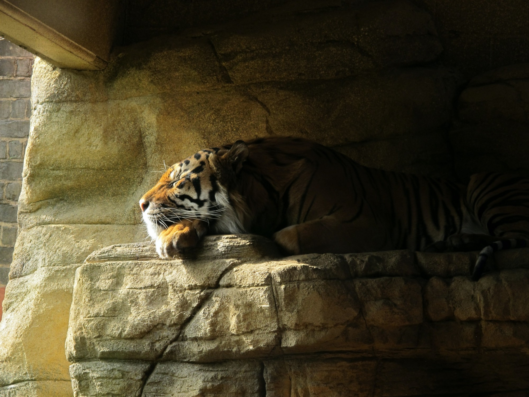 Tiger resting on a stone ledge