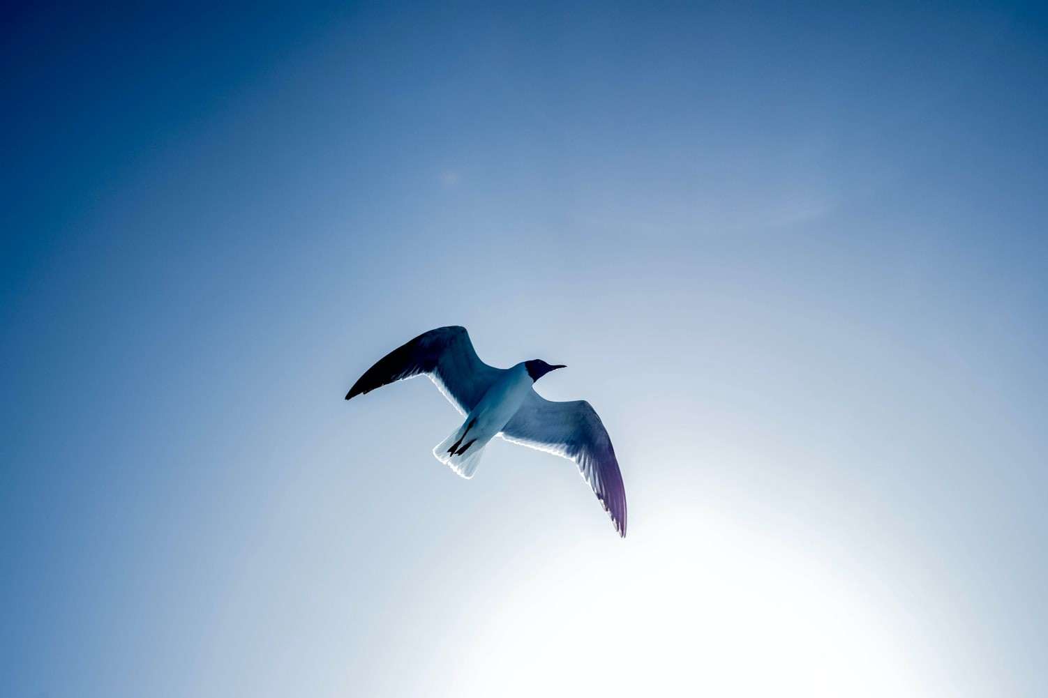 Bird with wings spread in blue sky.