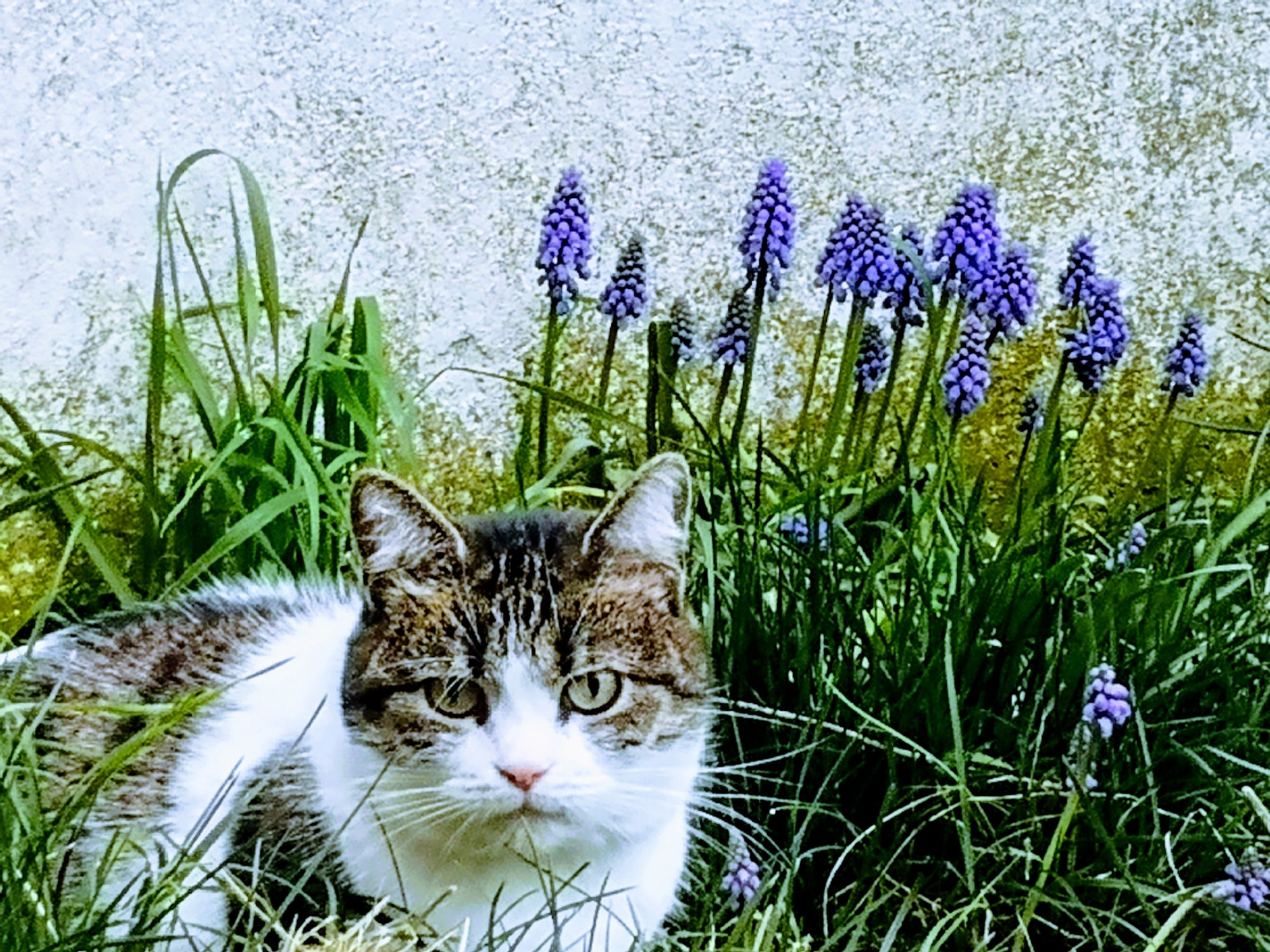 Twinkle the cat with flowers