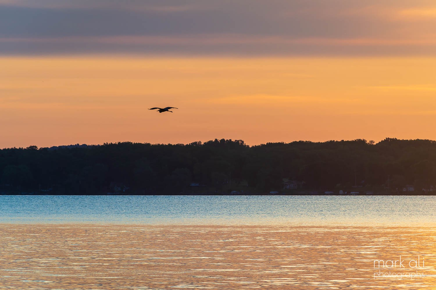 A bird flies by an early-morning sky, just before sunrise.