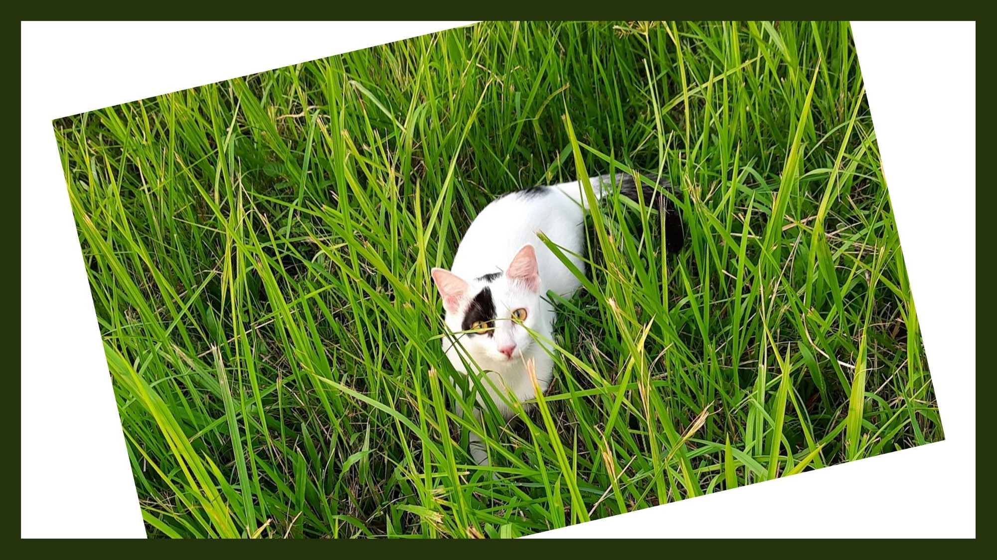My cat Mini is playing hide and seek in the grass