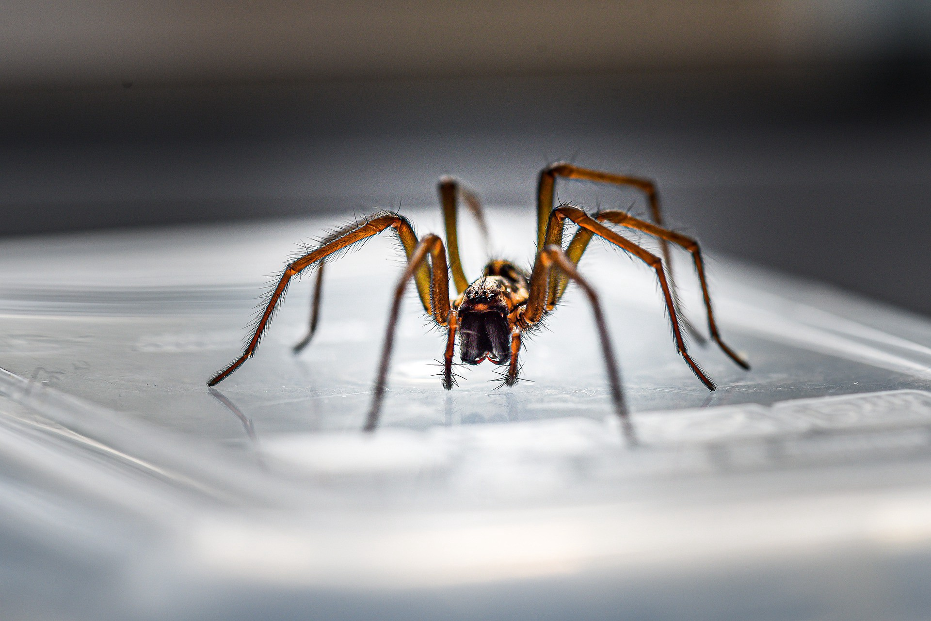 A large, ominous-looking brown spider crouches on a pale, ridged glass surface, facing the camera.