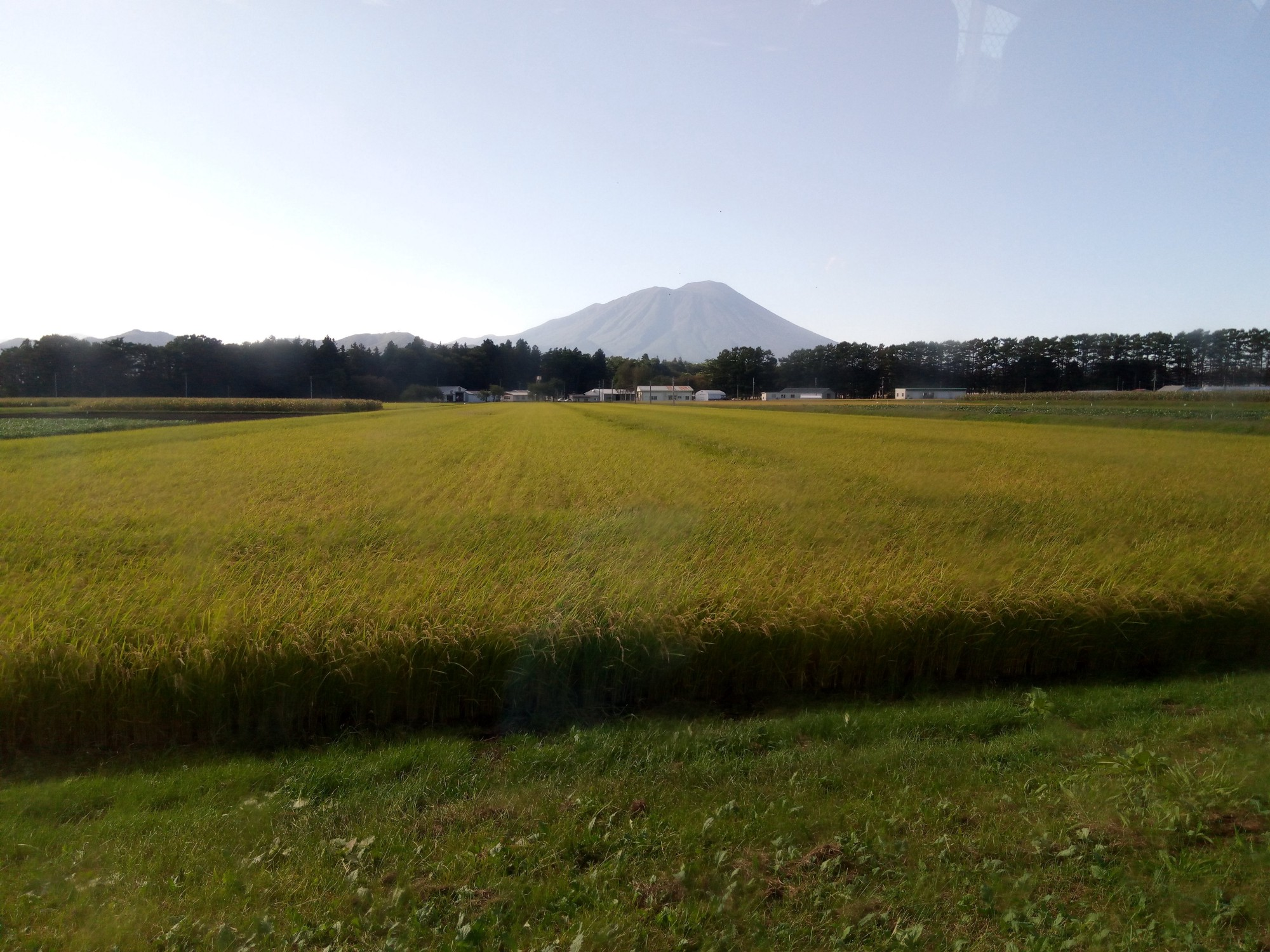 Can pesticide use in rice paddy fields be made smarter?