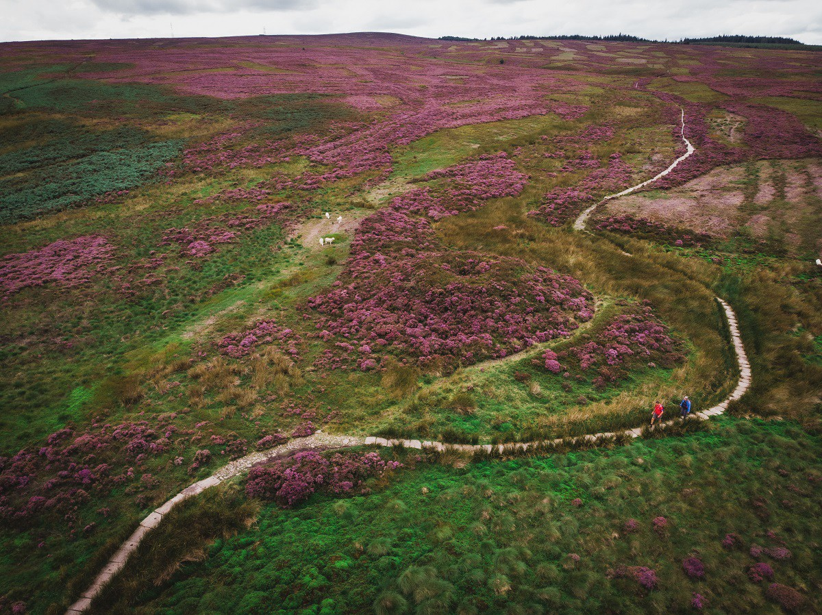 Looking down on heather moorland and the Offa's Dyke path running through it.
