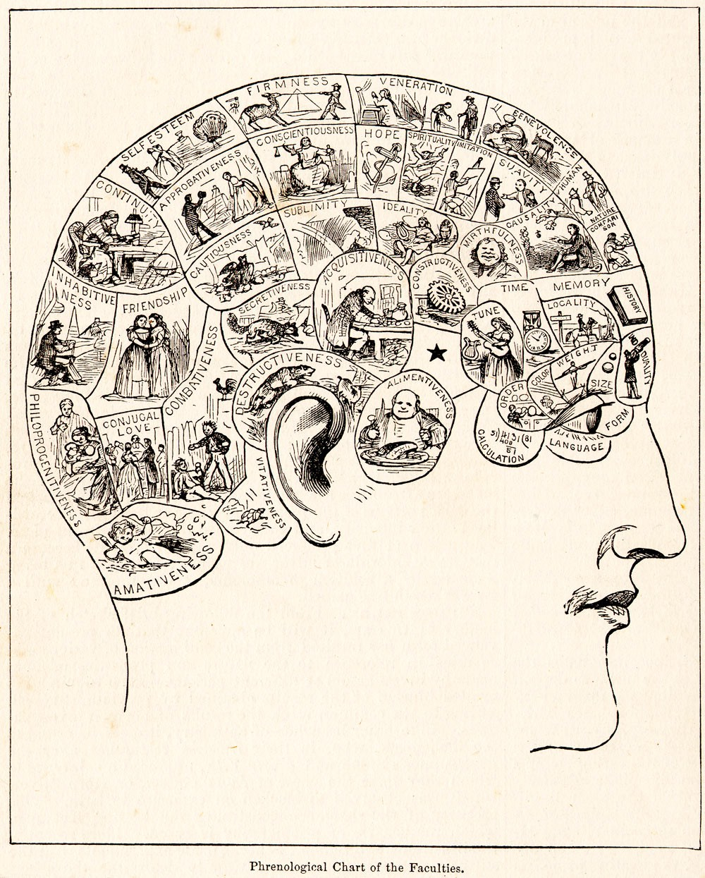 Phrenological Map of the Human Head