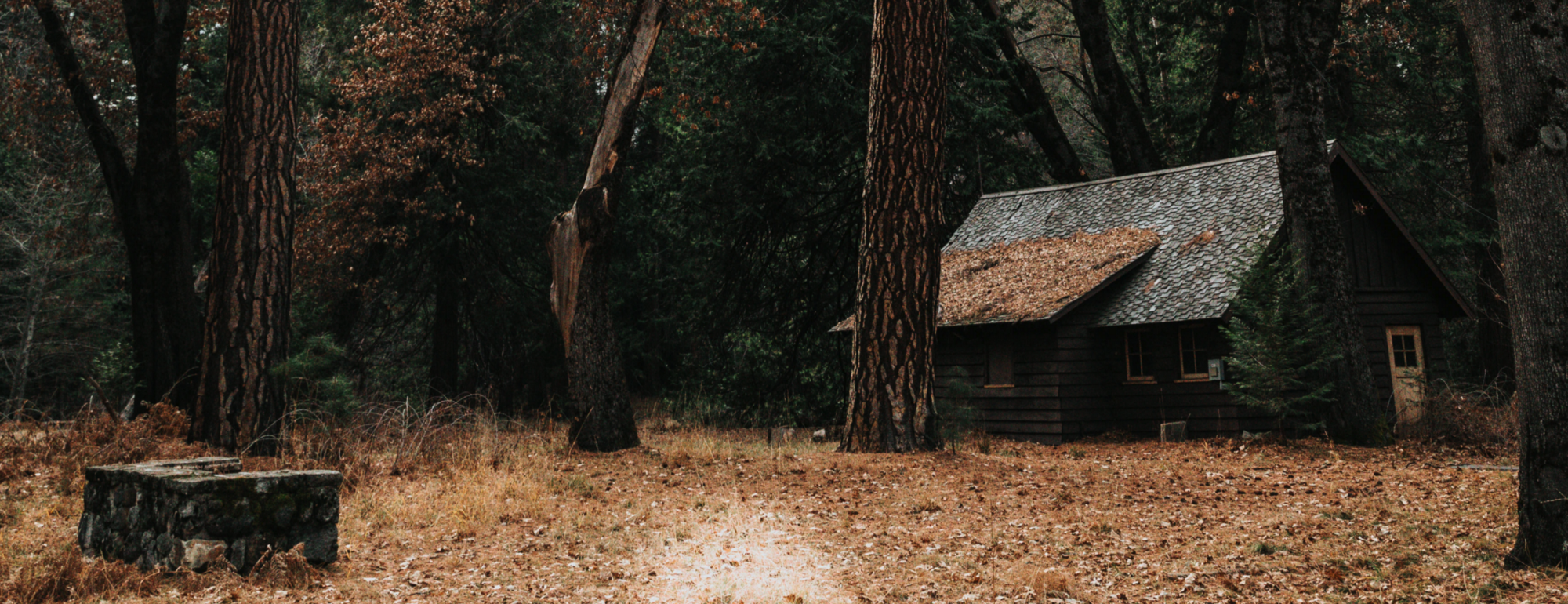 Creepy cabin in the woods. Setting an alternative stage for Goldilocks to make a point about decision intelligence.
