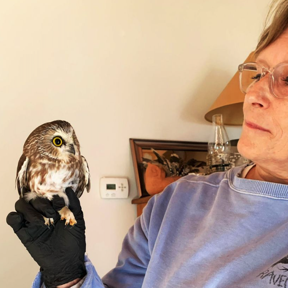 The Tiny Owl Who Came to Visit the Big Apple Is 'A Christmas Miracle'   by 𝐆𝐫𝐫𝐥𝐒𝐜𝐢𝐞𝐧𝐭𝐢𝐬𝐭 ...