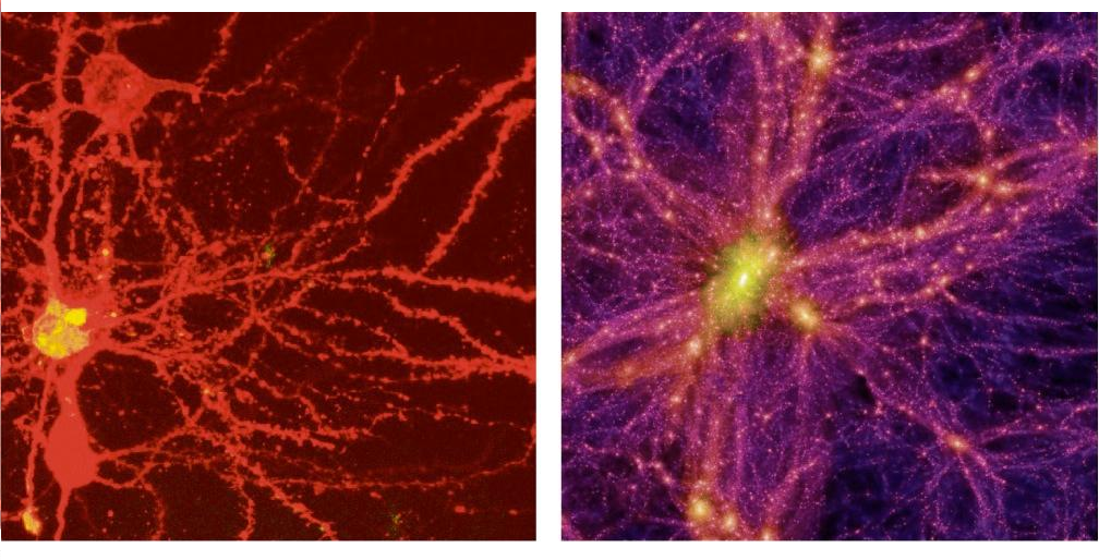 A neuron and the observable Universe
