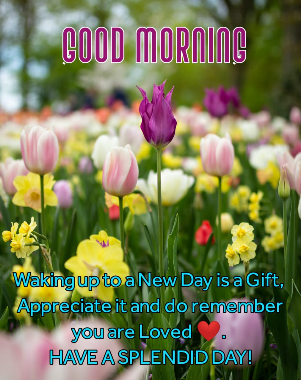 Best 100 Good Morning Flowers Images For Wishes By Best Quotes Shayari Medium