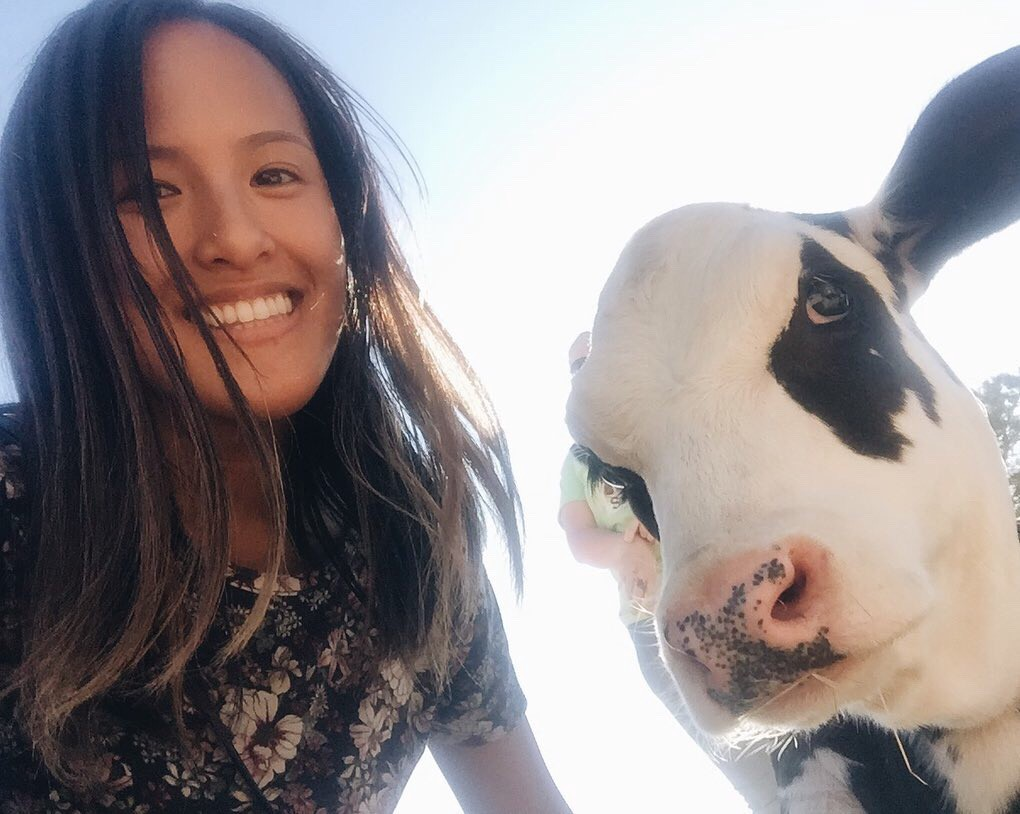 A selfie of the author and Tommy the calf looking into the camera with his spotted nose