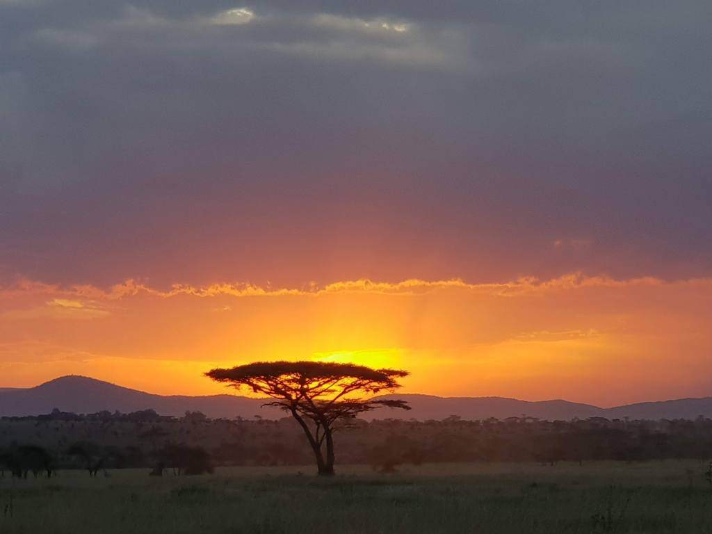 Looking out over the plains of the Serengeti National Park. A lone tree is in the foreground, hills can be seen in the distance and the scene is taken at sunset.