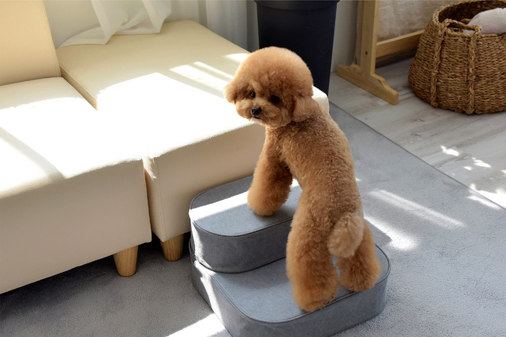 Keep Little Pets Safe With Stackable Cushion Amp Pet Step Stool