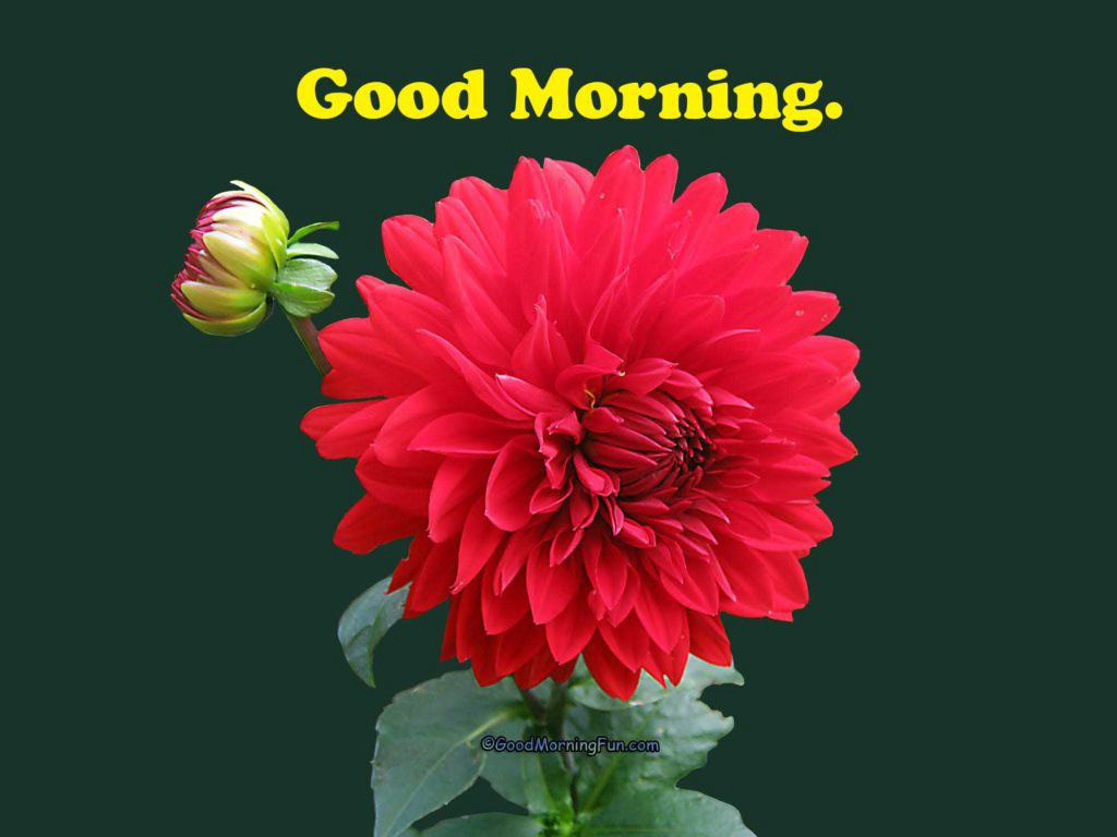Good Morning Flowers Quotes Good Morning Nature Hd Pics By Venkat Medium