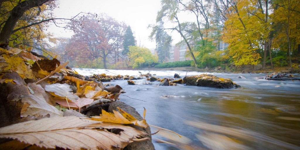 Fall leaves along the banks of the Red Cedar River