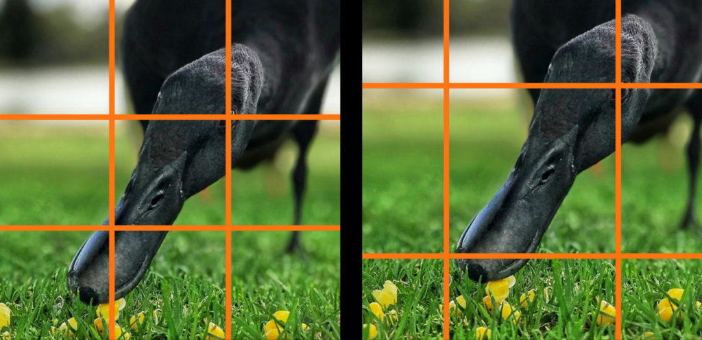 compare two grid lines for a square photo - iphone photography training
