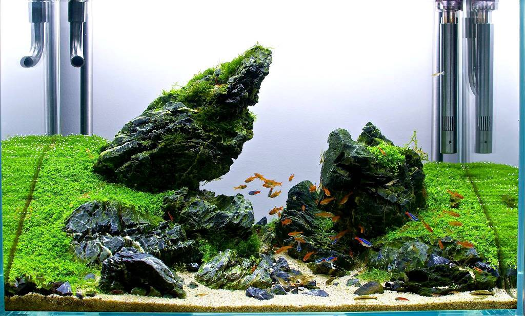 Aquascape Ideas Aquascaping With Driftwood And Rocks