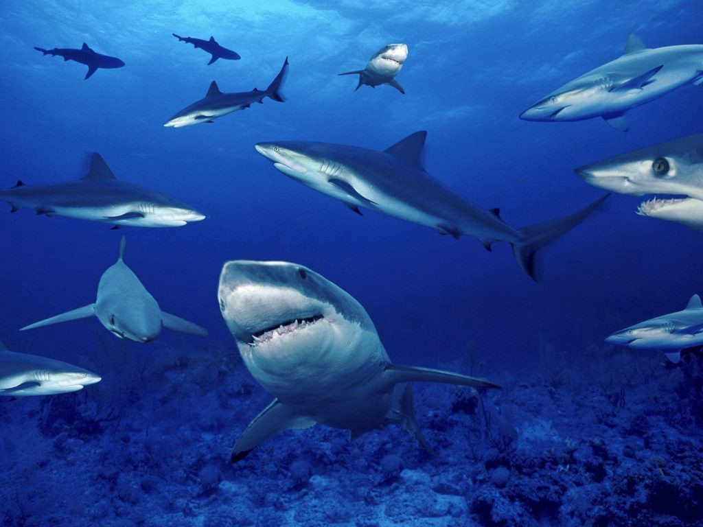 """If you don't hunt """"the shark"""" more will show up over time."""