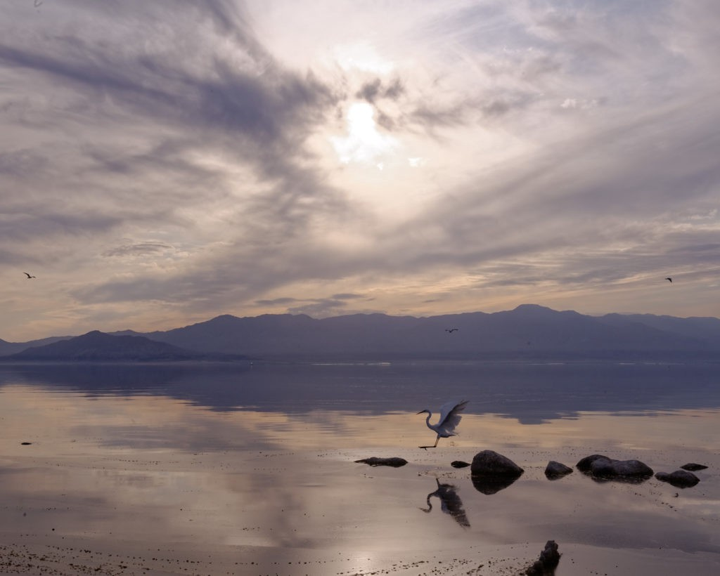 The Salton Sea is victim of environmental effects and neglect.