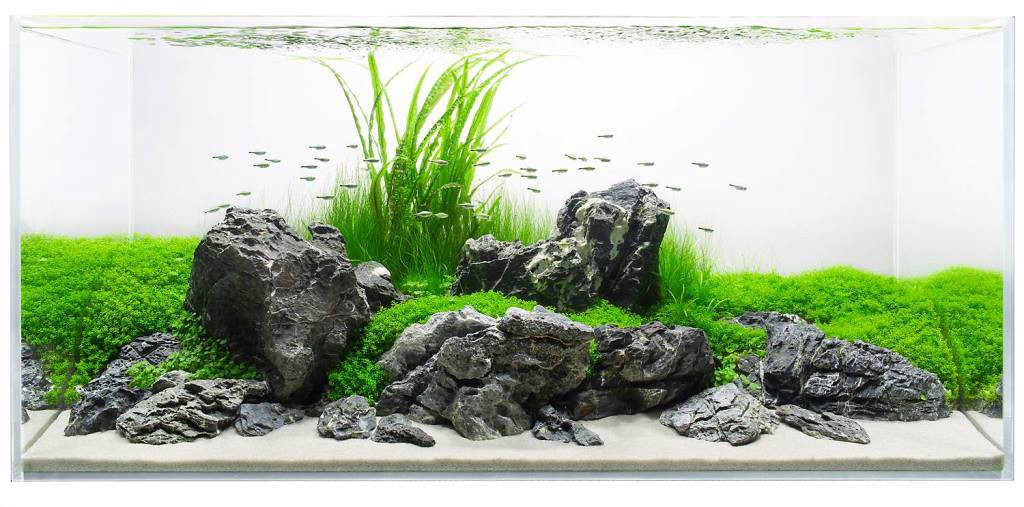 Can I use stones and driftwood in My Planted Aquascape? | by Planted Tank Source | Medium