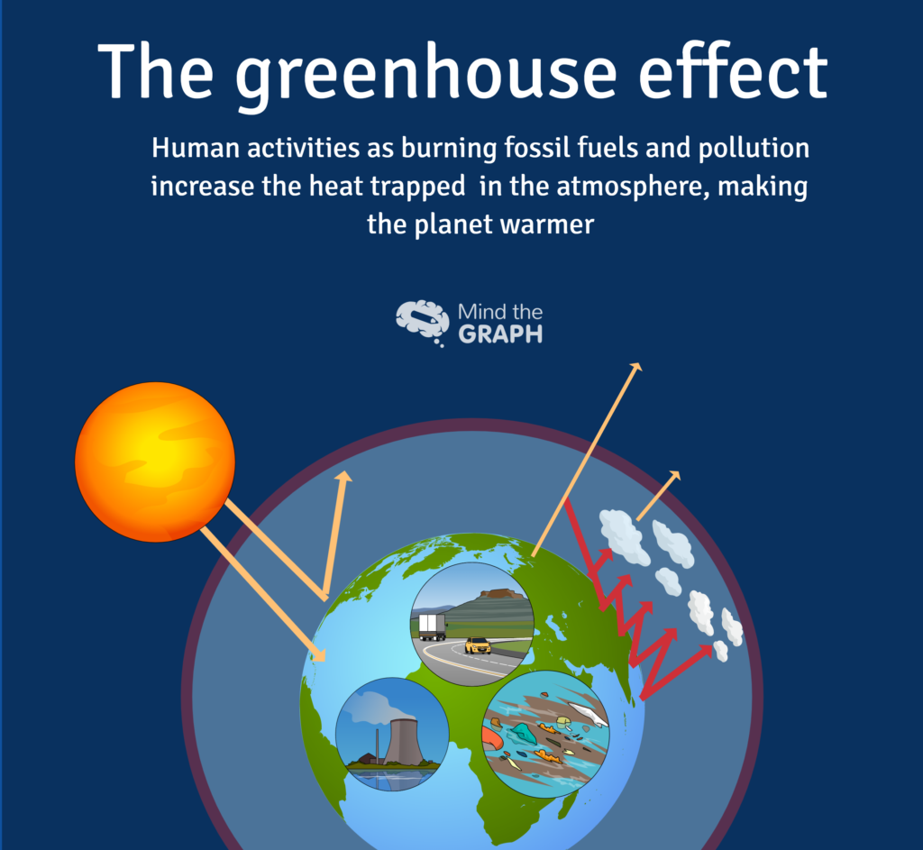 carbon cycle and greenhouse effect  u2014 a scientific